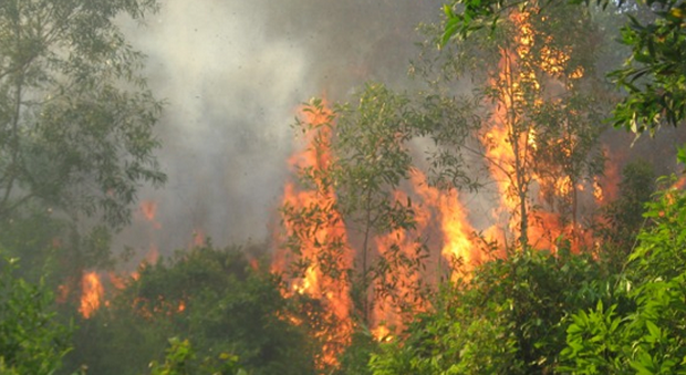 đốt rừng làm rẫy