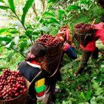 Lâm sản ngoài gỗ – Cẩm nang ngành lâm nghiệp