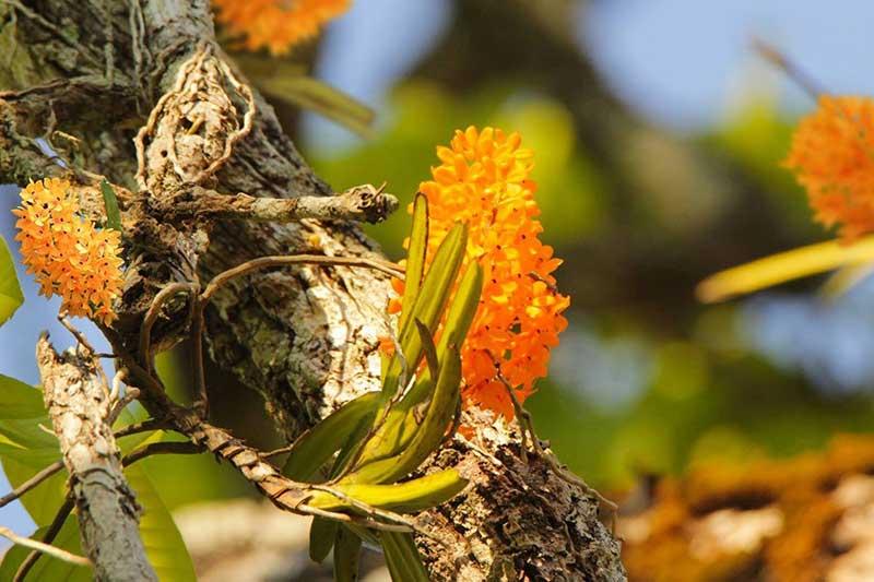 Một nhánh lanh trong vườn quốc gia yok đôn