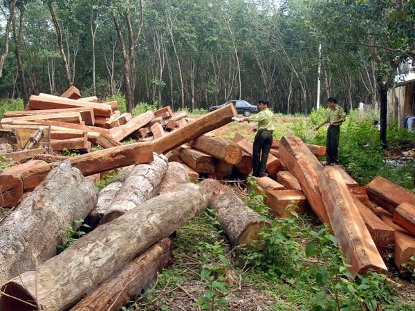 nạn chặt phá rừng