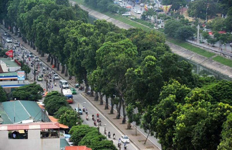 trồng cây xanh trong thành phố