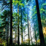 Giá trị và vai trò của rừng đối với nền kinh tế quốc dân