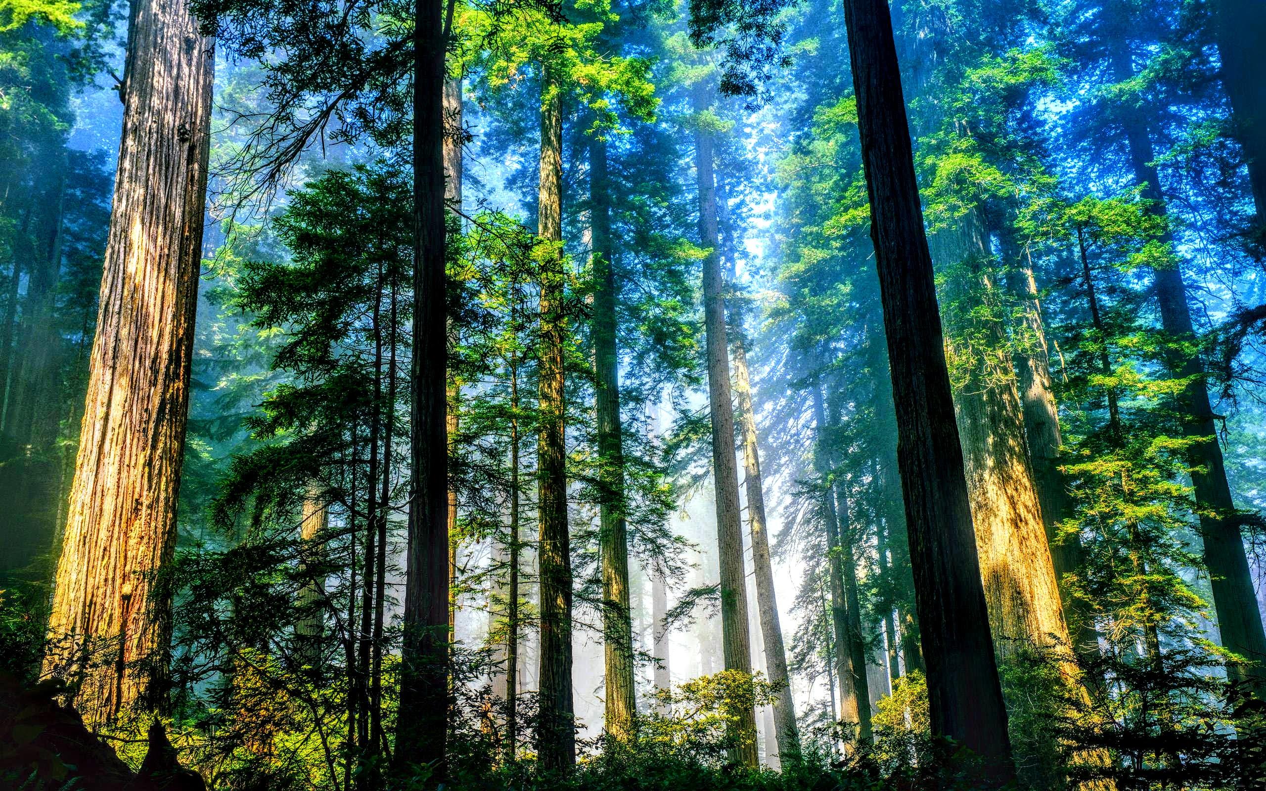 vai trò của rừng
