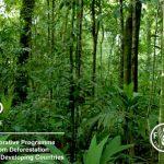 REDD+ – Giải pháp bảo vệ rừng để bảo vệ môi trường