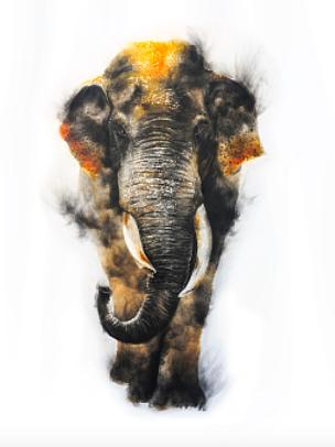 voi rừng tây nguyên