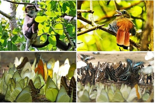 Đa dạng sinh học của vườn quốc gia Cát Tiên