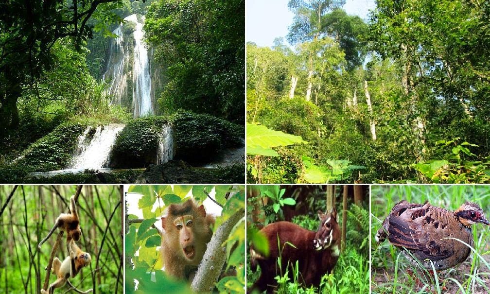 Đa dạng sinh học của vườn quốc gia Ba Vì