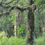 Rừng nguyên sinh là rừng gì và những rừng nguyên sinh nổi tiếng