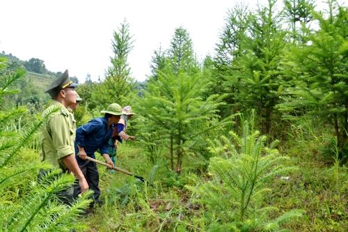 Nguyên tắc bảo vệ và phát triển rừng đặc dụng
