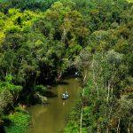 Rừng U Minh là một khu rừng được xếp vào loại quý hiếm trên thế giới