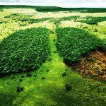 Báo động đỏ nạn chặt phá rừng ở Việt Nam