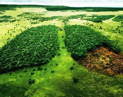 chặt phá rừng gây ra những hậu quả nghiêm trọng