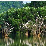 Hệ sinh thái rừng ngập mặn là gì mà cần phải bảo vệ?