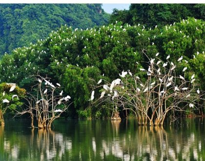 hệ sinh thái rừng ngập mặn