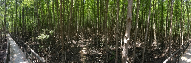 rừng đước