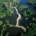 Rừng ngập mặn cần giờ khu dự trữ sinh quyển số 1 Việt Nam