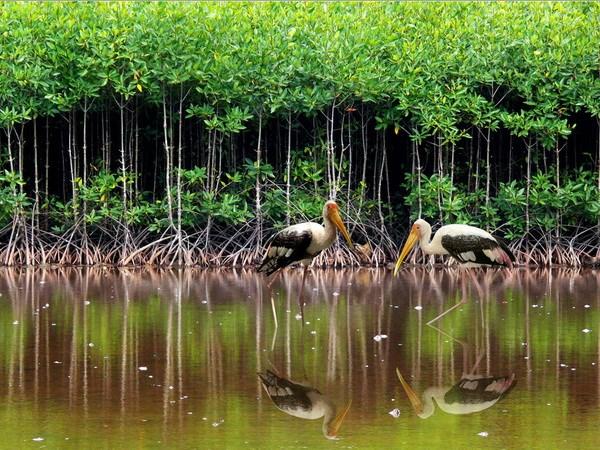 rừng ngập mặn