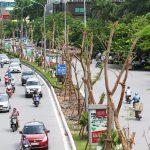 Trồng cây xanh và trồng rừng ở vùng thành phố và ở khu công nghiệp để nhằm mục đích gì?