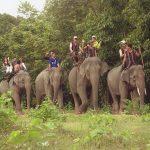 Vườn quốc gia Yok đôn – khu rừng đặc dụng lớn nhất Việt Nam