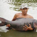 Cá Hô hay cá chép khổng lồ Xiêm