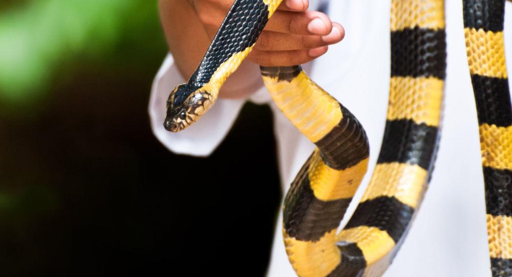 Đặc điểm hình dáng rắn cạp nong