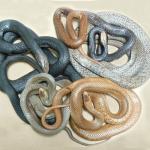 """Top 10 loài rắn độc nhất thế giới, một phát cắn là """"đi theo"""" tổ tiên ngay"""