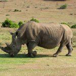 Bảo vệ động vật hoang dã – vấn đề của toàn xã hội