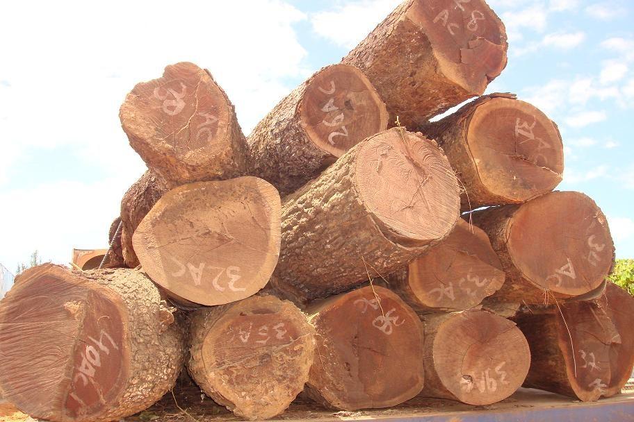 gỗ quý hiếm nhóm 1a