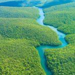 Rừng Amazon ở đâu? Những bí ẩn không thể ngờ về rừng amazon