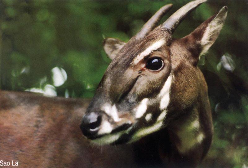Đa dạng hệ động vật của vườn quốc gia