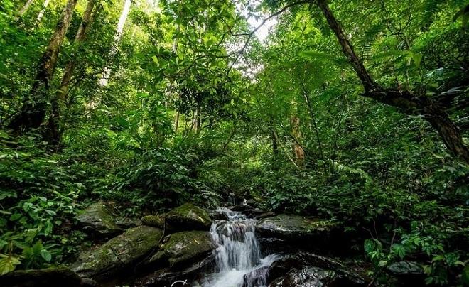 Đa dạng hệ thực vật của vườn quốc gia Pù Mát