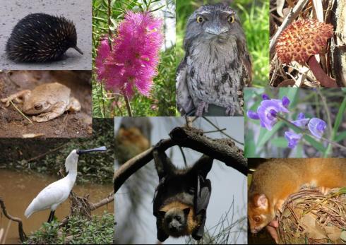 Đa dạng sinh học vườn quốc gia Bạch Mã