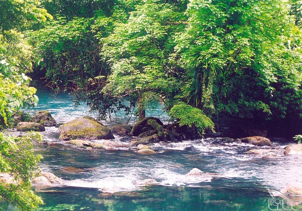 Đa dạng về thực vật của vườn quốc gia Phong Nha Kẻ Bàng