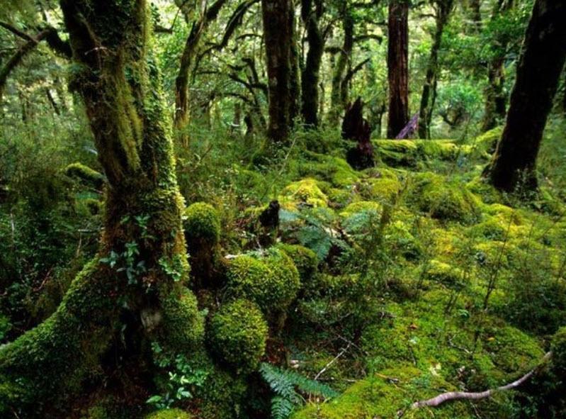 Những khu rừng nguyên sinh