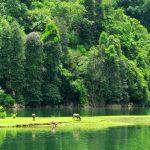 Vườn quốc gia Ba Bể với hệ động thực vật đa dạng của tỉnh Bắc Kạn