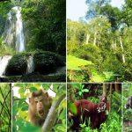 Bảo tồn và phát triển đa dạng sinh học vườn quốc gia Hoàng Liên