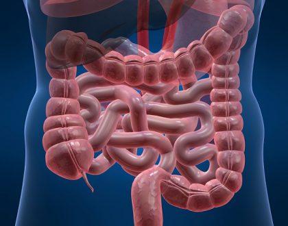 nhiễm trùng đường ruột là gì