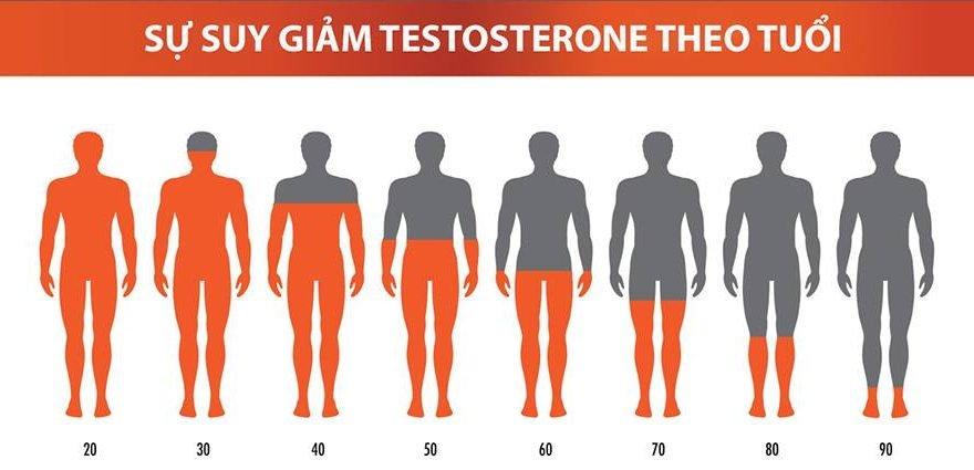 Testosterone-la-gi