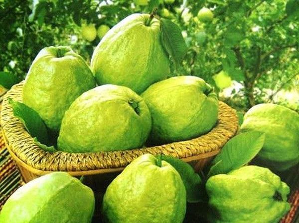 Ổi - Bệnh tiểu đường nên ăn trái cây gì