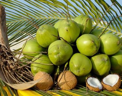chữa bệnh dạ dày bằng quả dừa