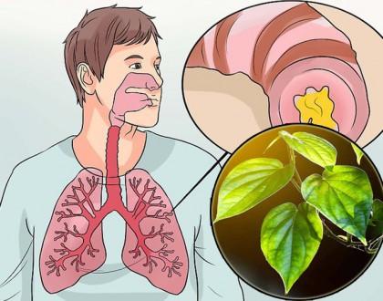 Chữa viêm phế quản bằng lá trầu có hiệu quả không?
