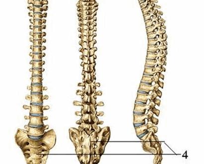 giải phẫu cột sống